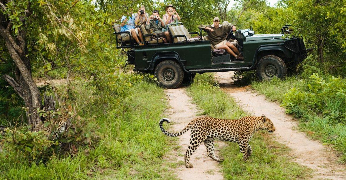 safari en Afrique - image
